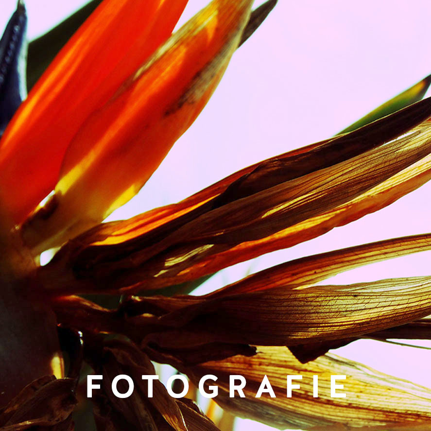 Fotoproduktion, Produktfotografie